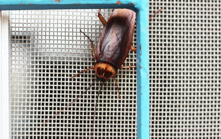 a cockroach on a window screen