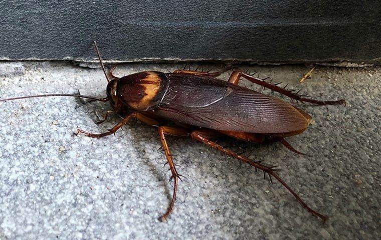a cockroach on gravel in colorado