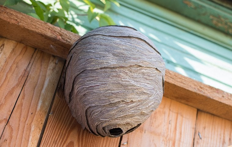 a wasp nest on the side of a house