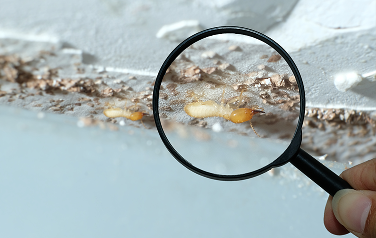 termites under a magnifying glass