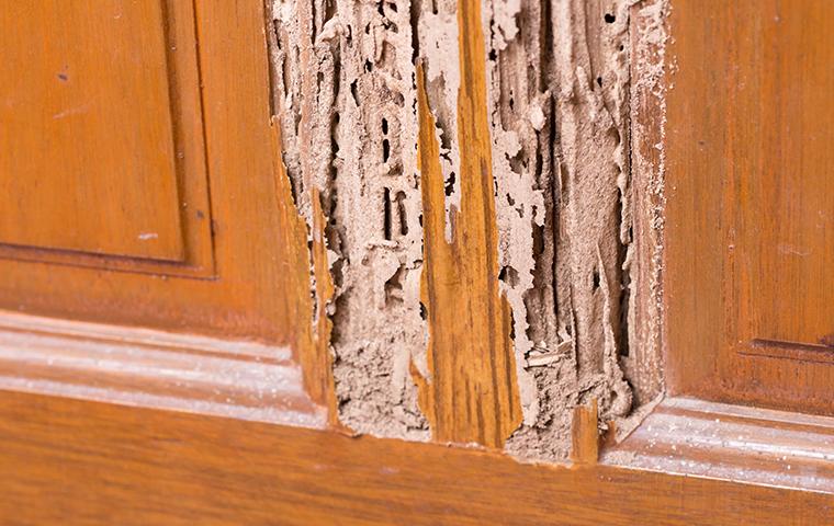 termite damage in home