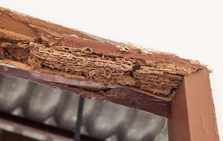termite damage on door frame