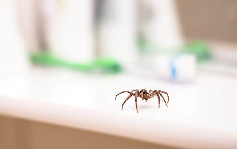 a house spider crawling on a counter top in a los angeles home
