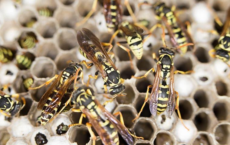 many wasps on nest