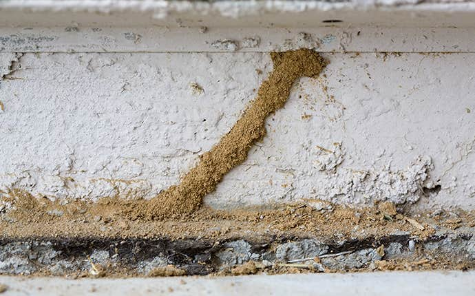 termite damage in a home