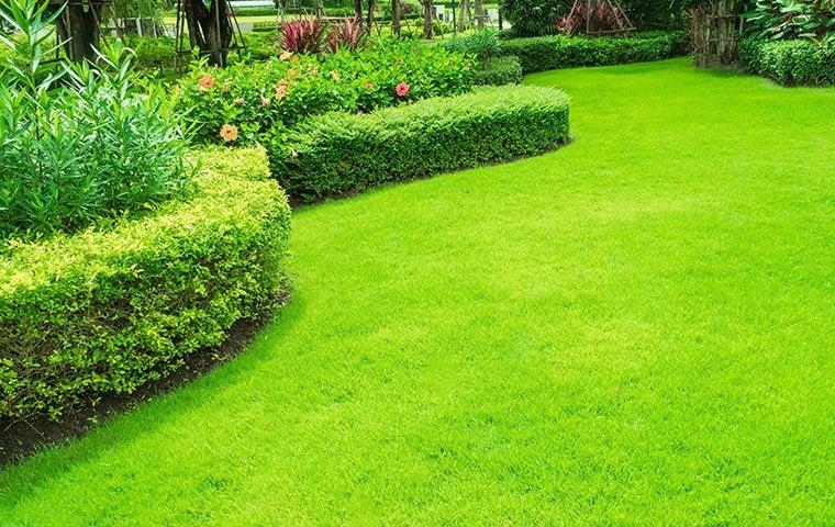 a healthy lawn in los angeles