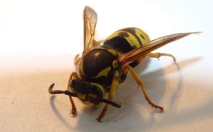 a wasp in a house