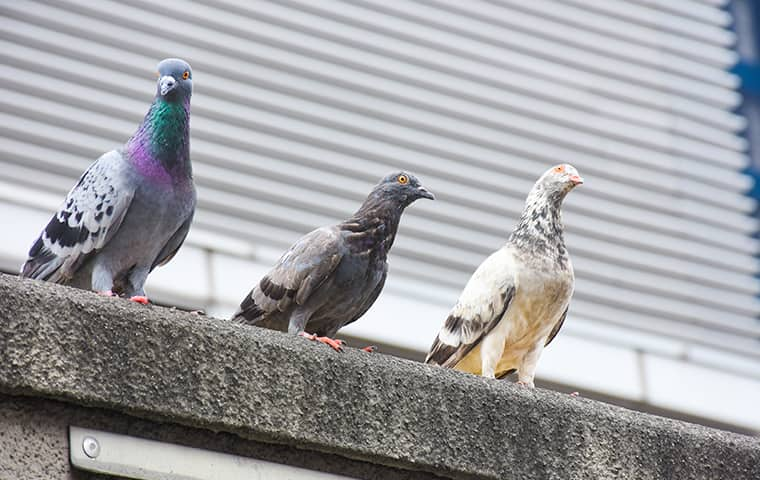 three pigeons on a los angeles commercial property