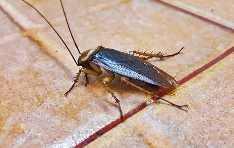 a cockroach on a kitchen floor in a sacramento home