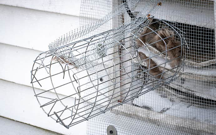 equipment to keep rodents out