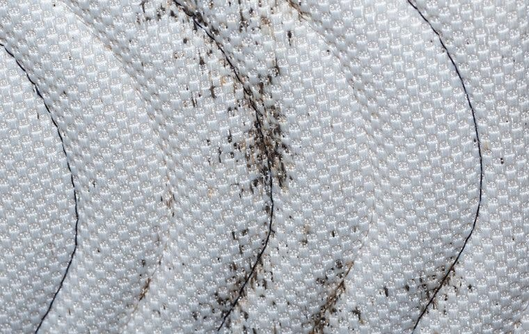 bed bug stains on a mattress in los angeles