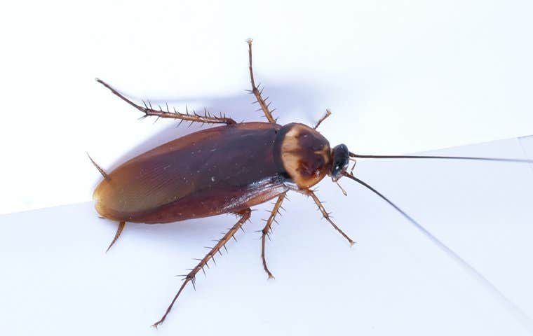 an american cockroach on a bathtub