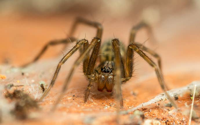 a house spider up close