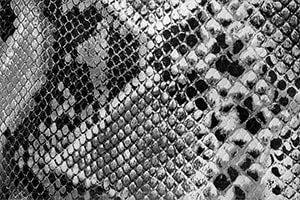 Schwarze-glänzendes Schlangenleder als Hintergrund