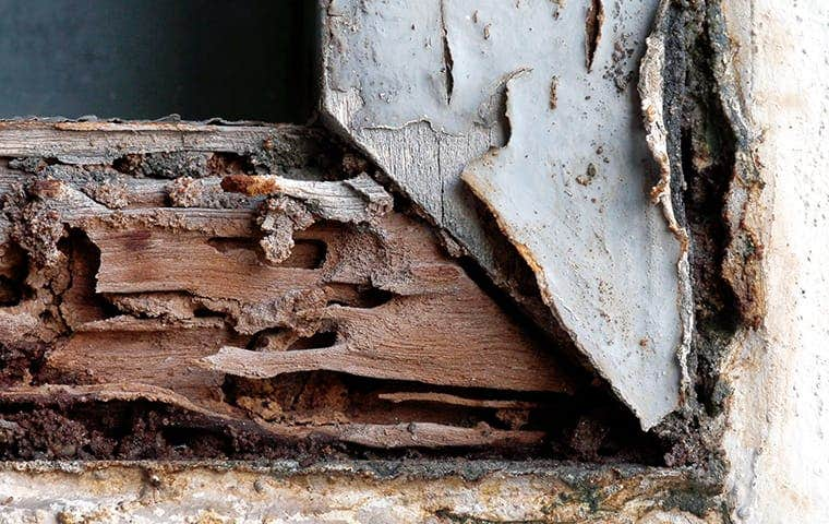 damaged wood in sacramento california