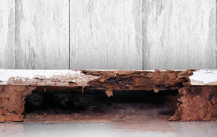 termite damage in a house in sacramento california