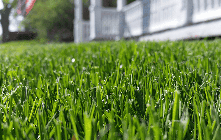 Green Grass in front of a house