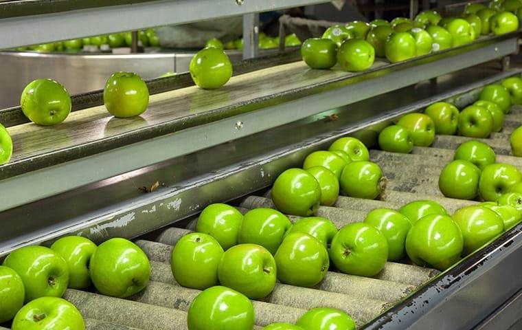 Apple processing plant