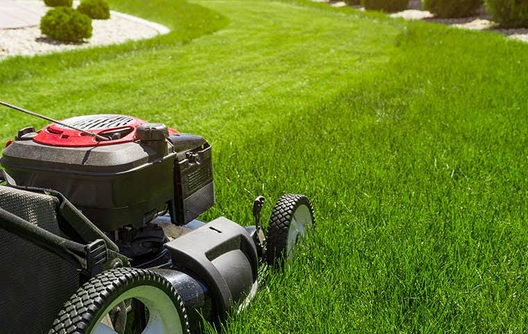 a lawnmower in south florida