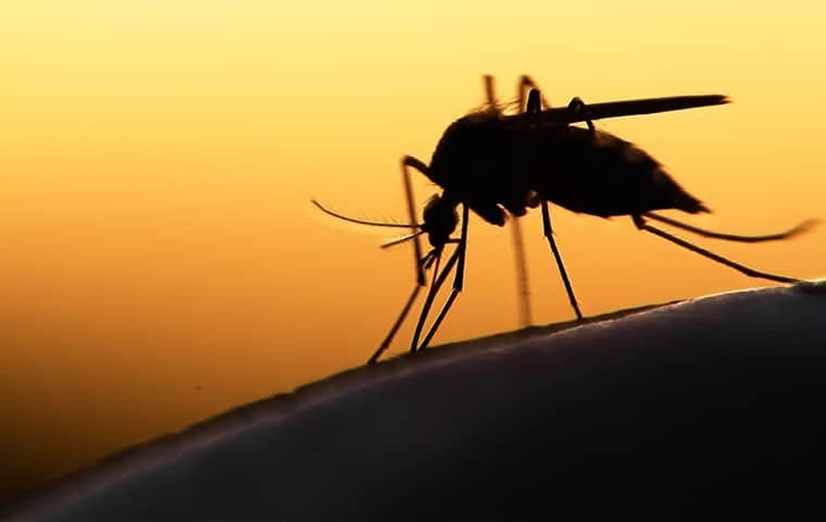 a mosquito biting a persons shoulder at dusk