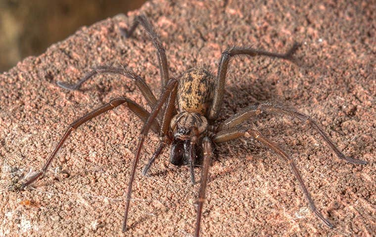 house spider on a rock