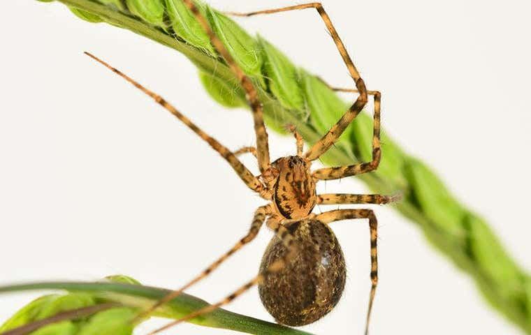spider on a plant in a house