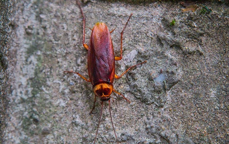 cockroach on a rock