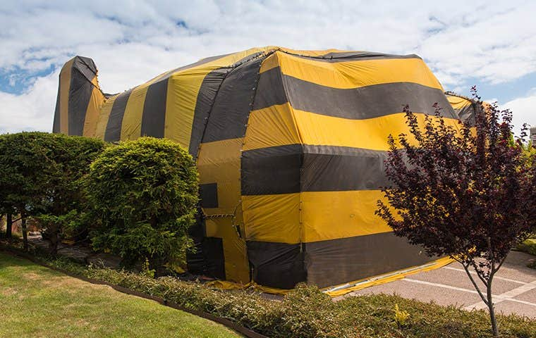 a fumigation tent around a home