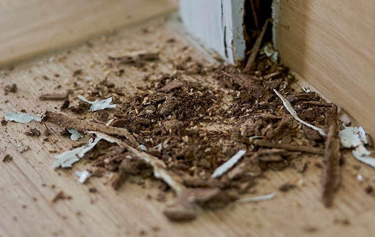 termite damage inside a home
