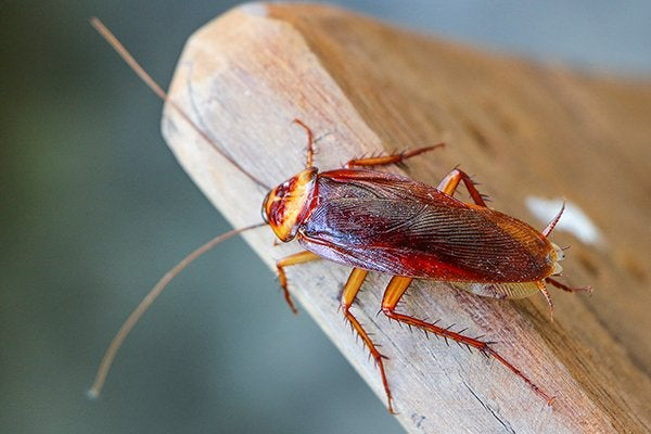 cockroach crawling on wood