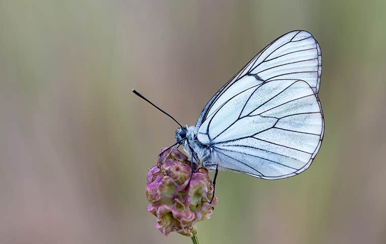 a white moth on a flower