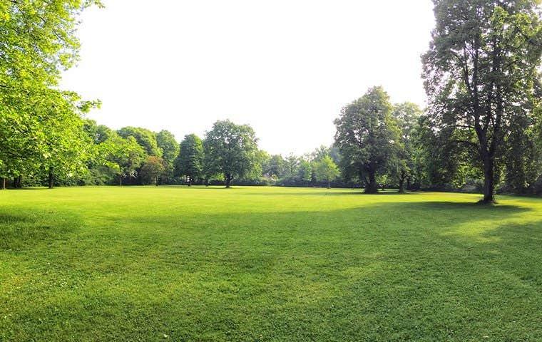 a beautiful green yard