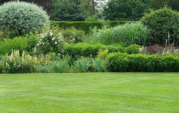 nice groomed lawn