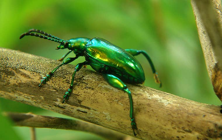 green beetle on a branch