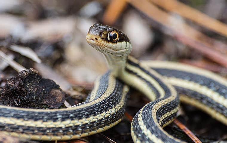 a snake up close