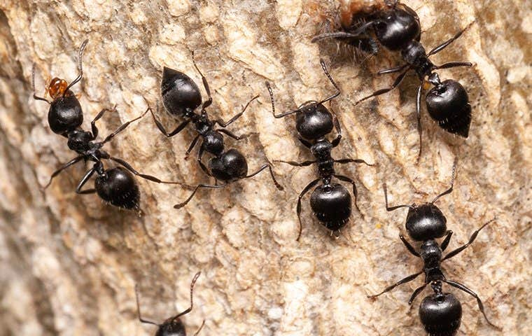 ants on the bark of a tree