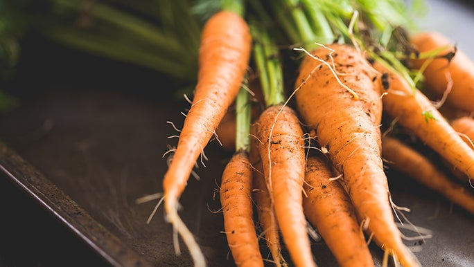 Close up image of freshly picked organic carrots.