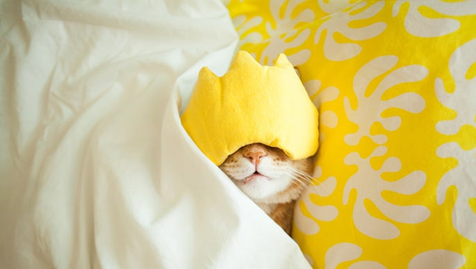 A cat is tucked into bed with a yellow facemask covering its eyes. Sleeping like a cat is a way to sleep better.