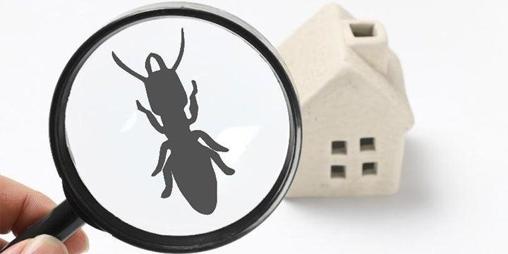 termite icon near a paper home