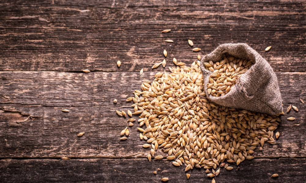 Barley on a wooden table (1).jpg