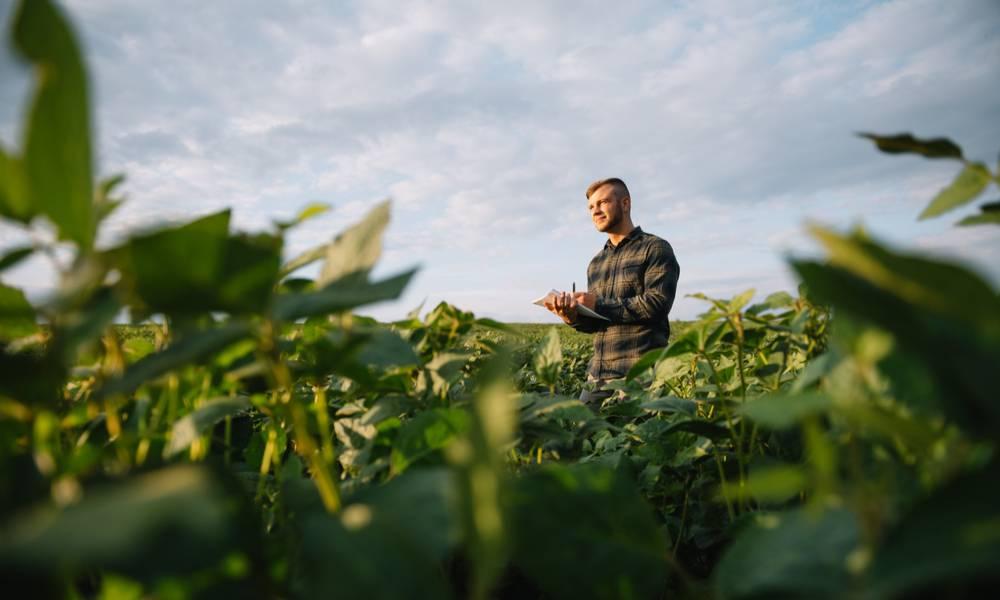 Farmer inspecting crops growing in the farm field (1).jpg