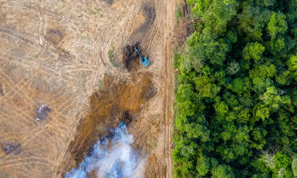 Aerial view of deforestation.jpg