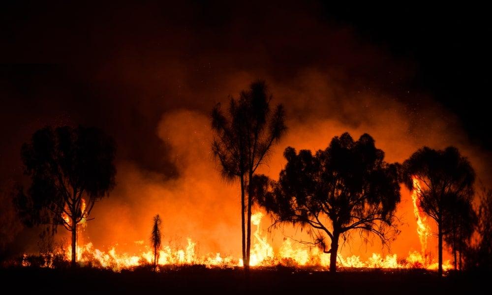 Australia bushfires-min.jpg