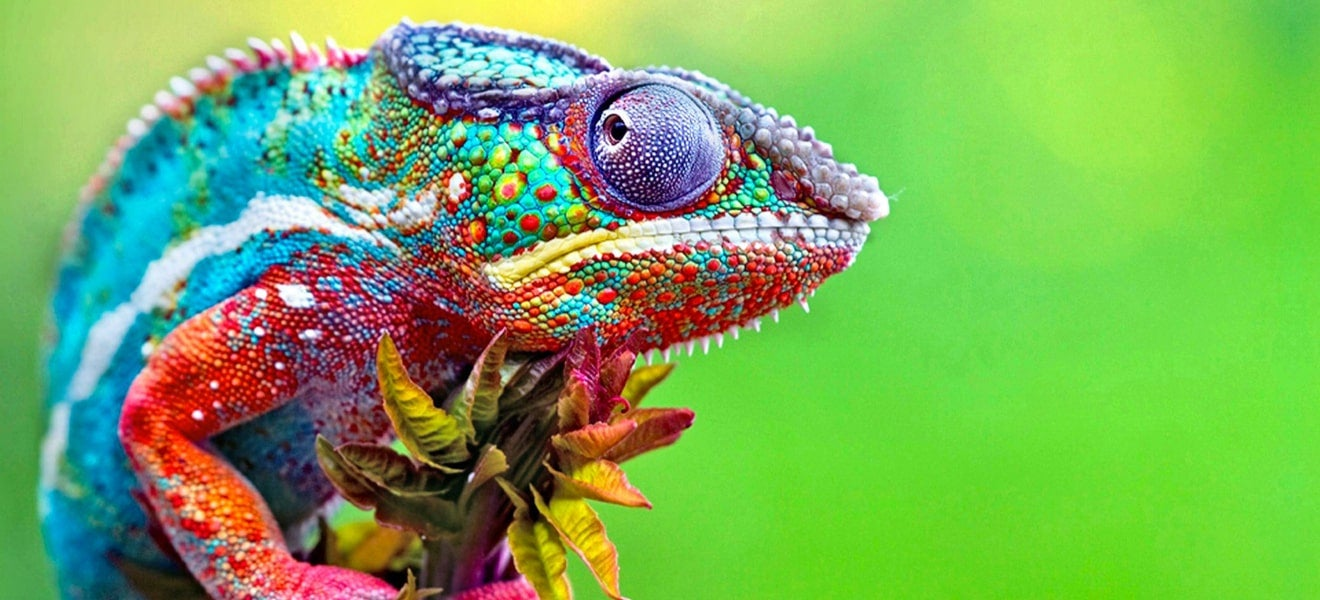 Why the workplace chameleon is a paradox for diversity and inclusion