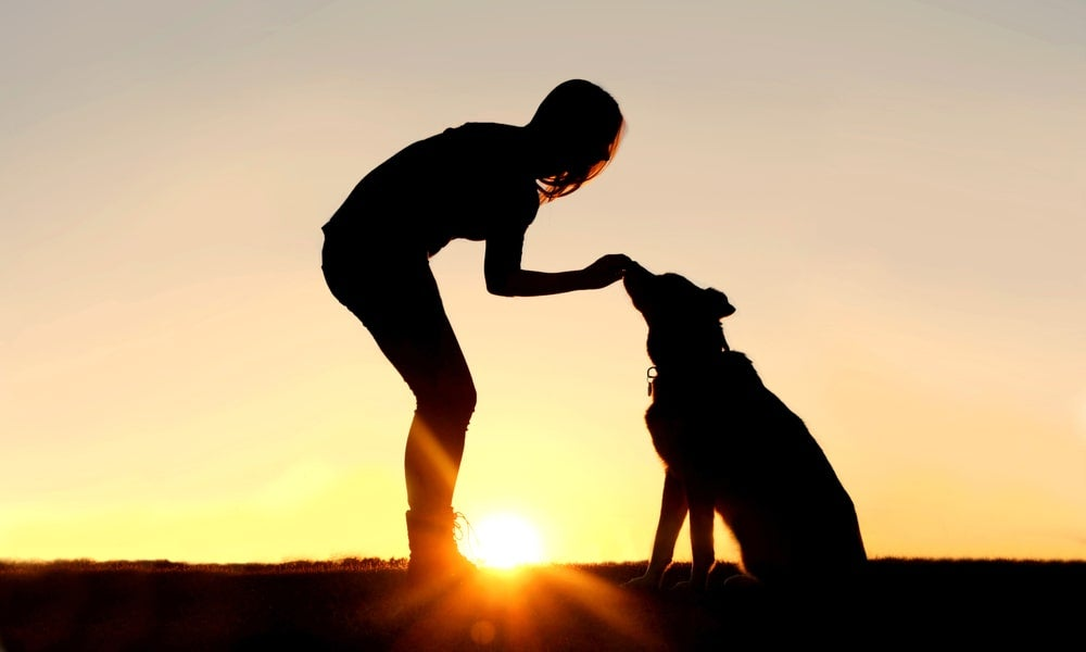 Research with our canine companions shows that older dogs are frequently easier to train than puppies-min.jpg
