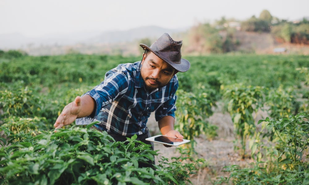 The farmer with tablet or smartphone and Inspecting plants in sunset, Agriculture and technology concept.jpeg