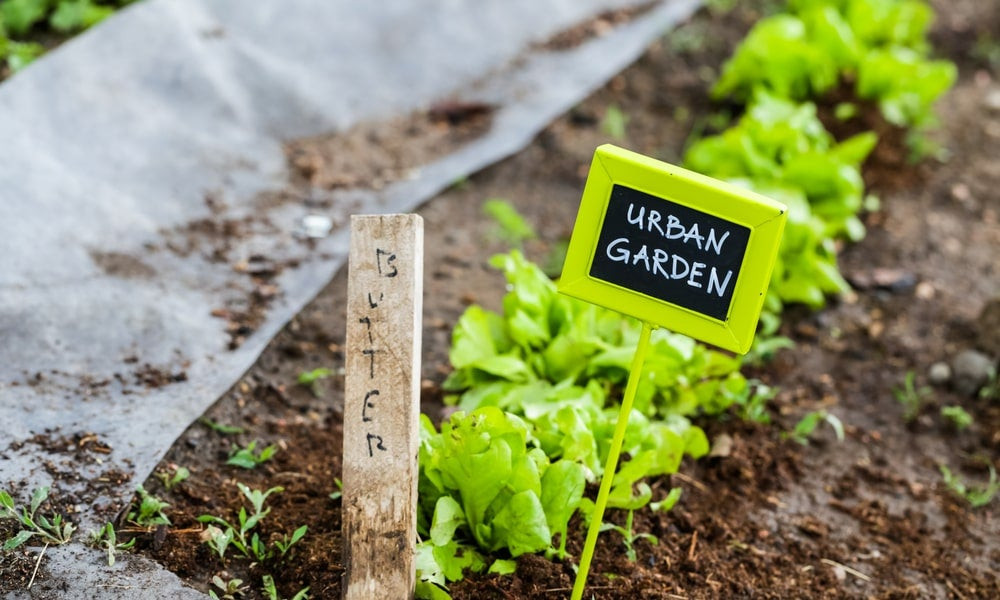 Urban garden-min.jpg