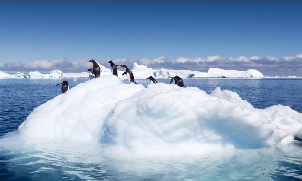 Climate change penguins on melting ice-min.jpg