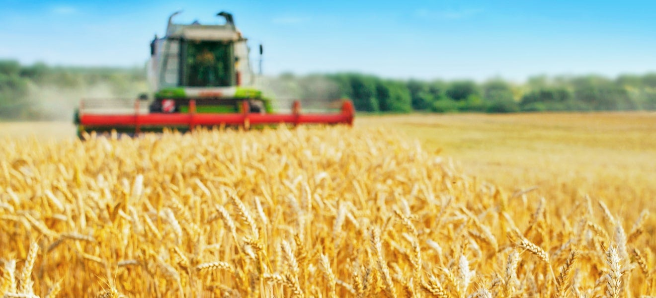 Getting back to harvest: the way forward after China's barley tariff