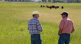 two men stood talking in a field with cows in the distance